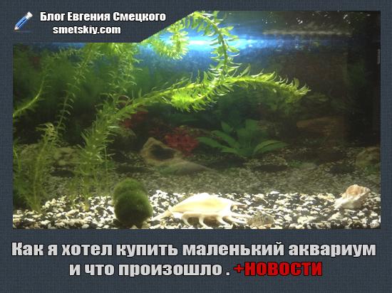 купить маленький аквариум